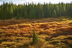 Colorado Meadow Stock Photos