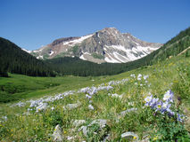 Colorado mountain with lupines Stock Images