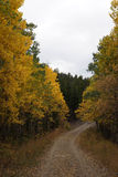 Colorado Mountain Scenery. Moody Hills Trail in the Fall with Aspens changing color in Colorado High Country royalty free stock photo