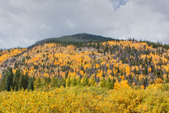 Colorado Mountain Scenic in Fall Royalty Free Stock Photos