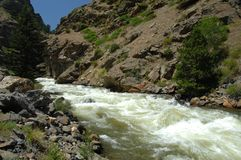 Colorado Mountain Stream 23 Stock Image