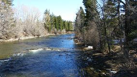 Colorado Mountain stream Royalty Free Stock Images