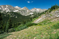 Colorado Mountain Wildflower Landscape Stock Image