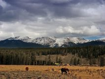Colorado Mountains and horses Royalty Free Stock Photos