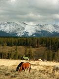 Colorado Mountains and Horses stock image