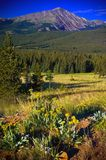 Colorado Mountains and Wildflowers Royalty Free Stock Photography