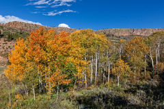 Colorado Mountainside in Fall Royalty Free Stock Image