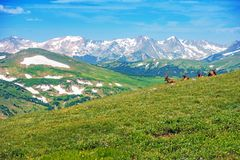 Colorado Panorama with Elks Stock Images