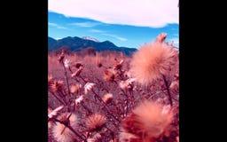 Colorado Pikes Peak. Mountain Rockies Autumn Stock Images