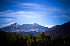 Colorado Plateau and forest Royalty Free Stock Images