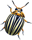 The Colorado potato beetle. Vector illustration Royalty Free Stock Images