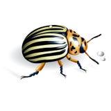 The Colorado potato beetle royalty free illustration