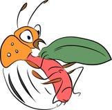 Colorado potato beetle - pest of potato crops Stock Images
