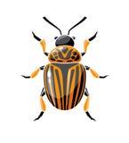Colorado potato beetle. Royalty Free Stock Photography
