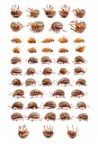 Colorado potato beetles Stock Photography