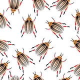 Colorado potato beetles Royalty Free Stock Photography