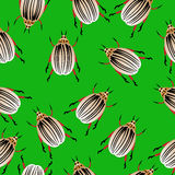 Colorado potato beetles seamless pattern Stock Photos