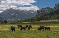 Colorado-Ranch mit San Juan Mountains Backdrop lizenzfreies stockfoto
