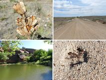 Colorado Reservoir, Road, Dried Plant and Ant Hill Royalty Free Stock Photos
