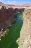 Colorado river Royalty Free Stock Image