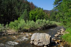 Colorado river flowing through the forest royalty free stock photography