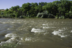 Colorado River in June. Snowmelt swells the Colorado River as it passes Watson Island near the Western Colorado Botanical Gardens in Grand Junction, Colorado in Stock Photo