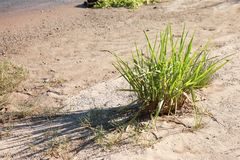 Colorado River Plant near the water Royalty Free Stock Photo