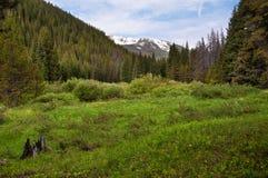Colorado Rockies immagine stock