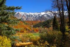 Colorado Rockies stock fotografie
