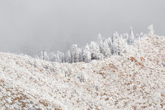 Colorado rockies frozen snow winter landscape Stock Photo