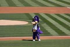 Colorado Rockies Mascot stock photos
