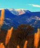 Colorado. Rockies Mountains Autumn Grass Stock Photos
