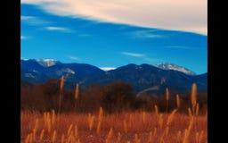 Colorado. Rockies Mountains Wild Flower Royalty Free Stock Photo