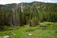 Colorado Rockies Royalty Free Stock Photos