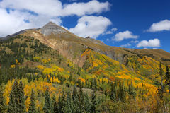 Colorado Rocky Mountain Forest canopy of fall clors of gold and yellow aspen trees Stock Photo