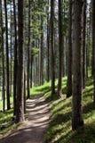 Colorado Rocky Mountain Hiking Trail sörjer in träd nära Vail Royaltyfri Foto
