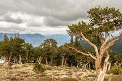 Colorado Rocky Mountains Royalty Free Stock Photography