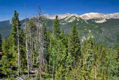 Colorado Rocky Mountains many dead trees Royalty Free Stock Photography