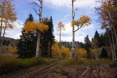 Colorado 4 rulla landskap i nedgång Royaltyfria Foton