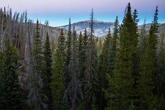 Colorado skog Arkivbild