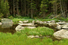 Colorado Stream Royalty Free Stock Images