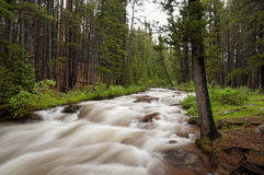 Colorado Stream Stock Image