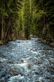Colorado Stream in Evergreen Forest. Stream with small water rapids flowing over rocks through a Colorado evergreen forest Royalty Free Stock Photography