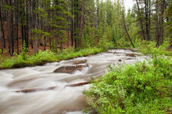 Colorado Stream Royalty Free Stock Image
