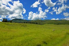 Colorado summer. Summer in beautiful Colorado mountains Royalty Free Stock Photography