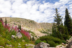 Colorado Summer Flowers Mountain Landscape Royalty Free Stock Image
