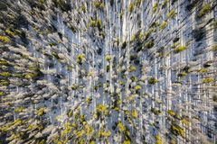 Colorado Trees Aerial View. Aerial view from above shooting straight down into trees along a mountainside in the Gore Range area of Summit County near royalty free stock image