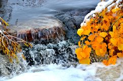 Colorado Waterfall in the Fall. After the first snow Royalty Free Stock Photo