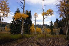 Colorado 4-wheeling scenery in Fall. 4-wheeling scenery in Fall along Sevenmile Trail in Colorado Rocky Mountain backcountry Royalty Free Stock Photos