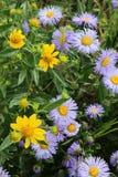 Colorado Wild Flowers Stock Image